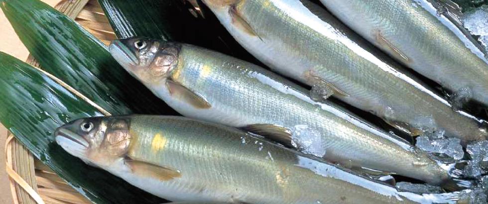 全国鮎養殖漁業協同組合