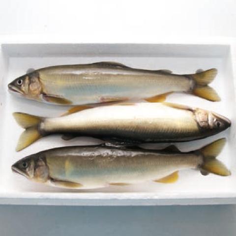 鮎フライパン焼き1